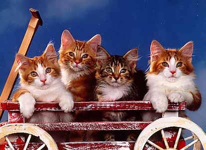 قطط تنتظر التقاط الصورة wagon.jpg